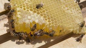 Bee and honey Stock Photo