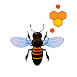 Bee Honey Comb Royalty Free Stock Image