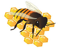 Bee On The Honey Comb. Vector illustration of a bee on the honey comb Royalty Free Stock Image