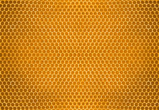 Bee honey in honeycomb pattern background