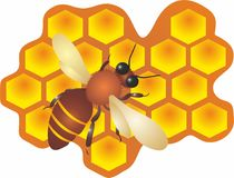 Bee And Honey Illustration Royalty Free Stock Images