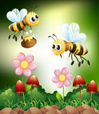 Bee and honey Stock Image