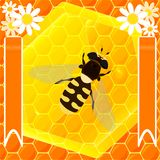 Bee and honey Stock Photos