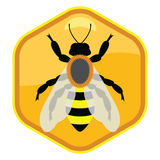 bee on honeycell, vector  Stock Photos