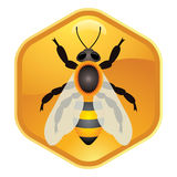 Bee on honeycell, vector  Royalty Free Stock Images