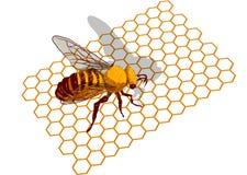 Bee on honeycells royalty free illustration
