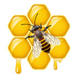 vector bee on honeycells Stock Photos