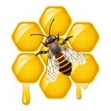 Vector bee on honeycells Stock Photos