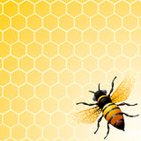 Bee on honeycomb. Background for you design Royalty Free Stock Photo
