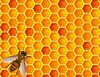 Bee with honeycomb Royalty Free Stock Photo