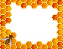 Bee with honeycomb Stock Images