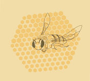 Bee & Honeycomb Royalty Free Stock Images
