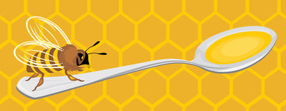 Bee on the honeycomb background Stock Photo