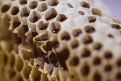 Bee and honeycomb closup and macro shot. In the morning Stock Images