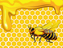 Bee with honeycomb and honey. Bee with honeycomb and drops of honey Royalty Free Stock Image