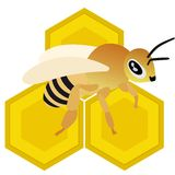 Bee. On honeycomb with honey. The illustration on a white background Royalty Free Stock Photo