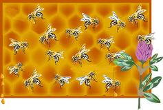 Bee and honeycomb illustration Stock Photos