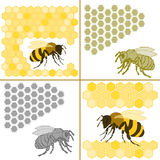 Bee and honeycomb Stock Photography