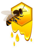 Bee and honeycomb Royalty Free Stock Images
