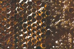 Bee honeycomb texture, wallpaper or background, close-up. Natural bee honeycomb texture, wallpaper or background, close-up, top view, horizontal composition royalty free stock photo