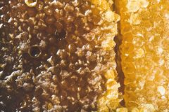 Bee honeycomb texture, wallpaper and background, top view, close-up. Natural bee honeycomb texture, wallpaper and background, close-up, top view, horizontal stock photos