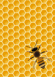 Bee on honeycomb. Vector be on seamless honeycomb, eps10 , transparency used Royalty Free Stock Photo
