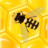 Bee and honeycomb Royalty Free Stock Photos
