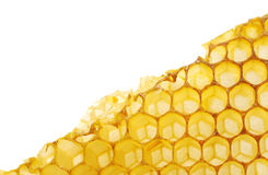 Bee honeycomb wax Royalty Free Stock Image