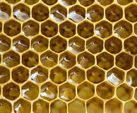 Bee honeycombs Stock Photos