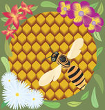 Bee on honeycombs. Raster illustration of bee on honeycombs surrounded by flowers Stock Photo