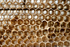 Bee honeycombs Stock Photos