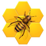 Bee on honeycombs Royalty Free Stock Image