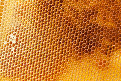 Bee honeycombs filled med close up Royalty Free Stock Photos