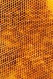 Bee honeycombs with honey Royalty Free Stock Photo