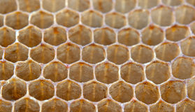 Bee honeycombs Royalty Free Stock Image