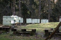 Bee houses Royalty Free Stock Photo