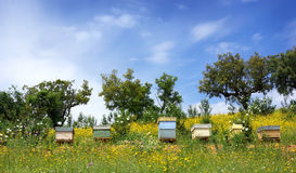 Bee houses at Portugal. Royalty Free Stock Photos