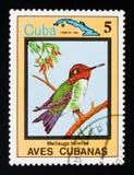 Bee Hummingbird Mellisuga helenae, Endemic birds, Cuban circa 1983. MOSCOW, RUSSIA - AUGUST 29, 2017: A stamp printed in Cuba shows Bee Hummingbird Mellisuga royalty free stock photo