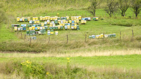 Bee huts in field. Bee hive huts in green fields in daylight Stock Photography