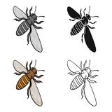 A bee, a hymenopteran insect. Stinging insect bee single icon in cartoon style vector symbol stock isometric Royalty Free Stock Photos