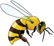 Bee. Illustration of a flying bee -  on white Stock Images