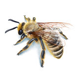Bee illustration, watercolour, drawing, ink, realistic Stock Photo