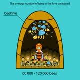 Bee infographics Stock Photo
