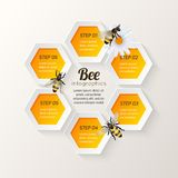 Bee infographics steps Royalty Free Stock Images