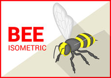 Bee isometric flat vector 3d. Honey bee insect isometric flat vector 3d illustration Stock Photography