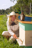 Bee keeper. Bee keeper at hive royalty free stock images