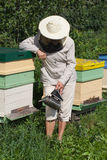 Bee keeper. Bee keeper at hive stock photo