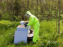 Bee-keeper in the apiary. Bee-keeper in a protective suit in an apiary Royalty Free Stock Photo