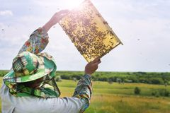 Bee-keeper with a bee frame checks the honey crop royalty free stock photography