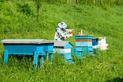 Bee keeper with blue beehives. On a green field royalty free stock photography